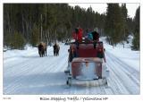 Bison stopping traffic
