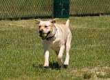 At the Dog Run