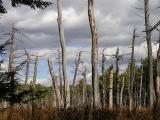 autumn sky over flooded forest  -- Oct--3--2004