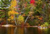 Grafton Pond Birches