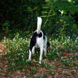 Joop's Dog Log - Sunday May 23