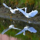 IMG_7083 birds.jpg
