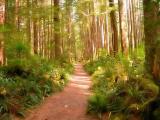 San Jo trail