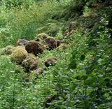 040516 Mossy Rocks