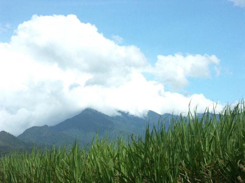 Canefields and Mountains