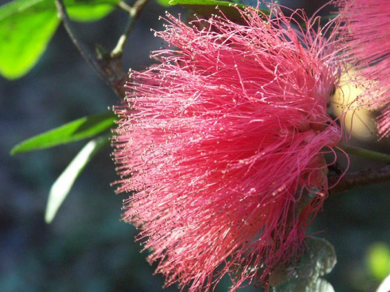 Blossom, close up