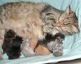 Mom and kids - one week old.
