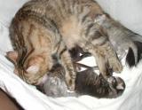 kittens280504a.jpg
