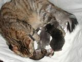 kittens280504b.jpg