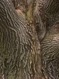 Very Old Bark