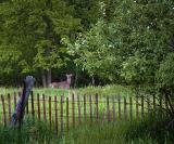 Deer Beyond Fence