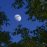 Moon & Leaves