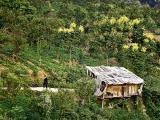 Morning Stroll, Badong