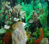Fishes in a tank.jpg(307)