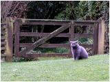 13 May 04 - Cat on the Grass