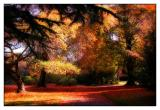 22 May 04 - Autumn in Christchurch  -Tribute to Paul Walters