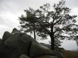 W rezerwacie skalnym Bubniszcze(143-4356_IMG.JPG)