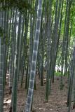 Kurakuen Garden, Okayama