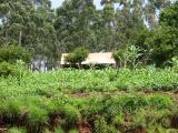 House and potato fields on road to Ndu