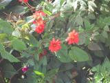 Close up of red flowers