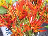 Buckets of heliconia