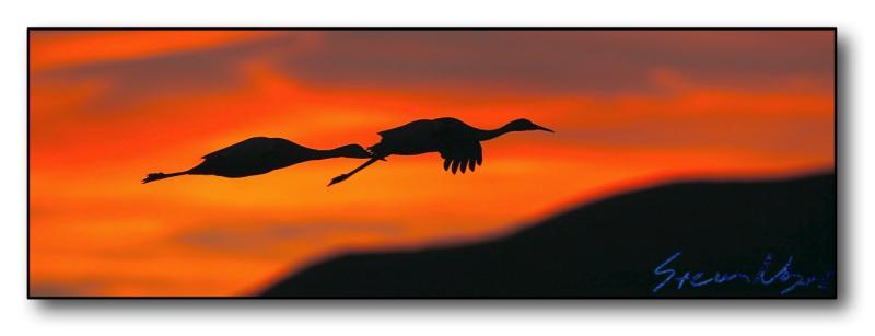 Cranes in Silhouette : Week 7