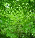 Killarney Forest 2