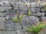 Burren wall