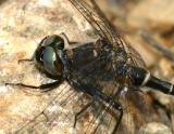 close up female