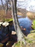 small brook.jpg