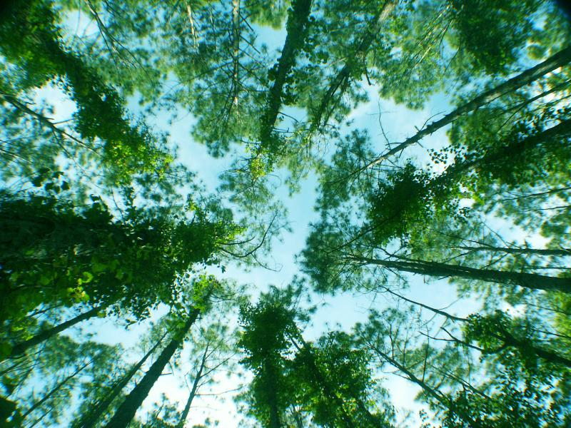 Treetop circle