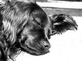 Ringo, our ex-stray dog