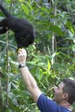 0963 black howler monkey and brandon - baboon santuary.jpg