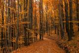 Fall in the Vienna Woods
