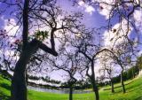 tree02jpg.jpg
