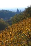 vineyards and the cathedral