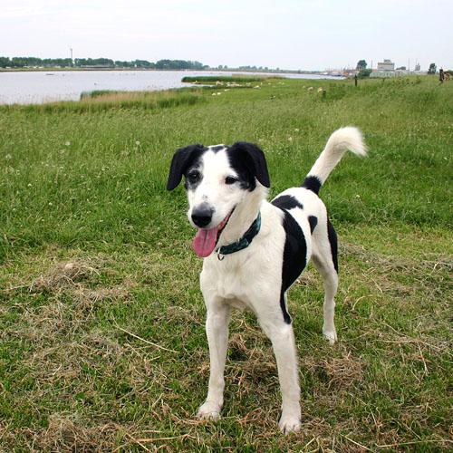 Joops Dog Log - Saturday June 05