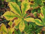 Leaf 03