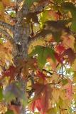 Queensland Autumn