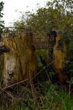 Stumps And Rail
