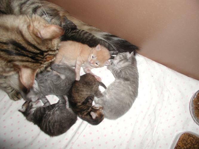 Two weeks old kittens