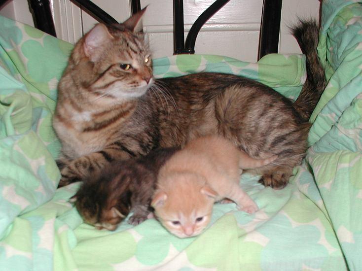 Torbie and Riki with mom