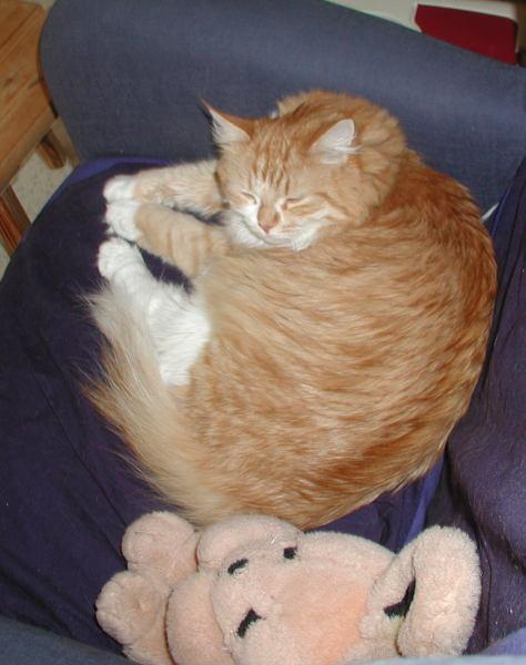 Inku having a nap!