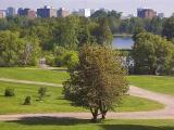 Arboretum Cityscape2