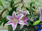 Pink Spotted Lilies