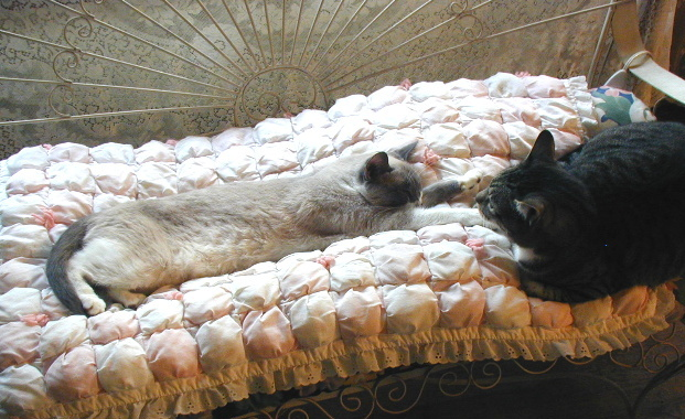 Possum was not sharing the love seat with Mr. Minnie...Mr. Minnie was NOT happy!