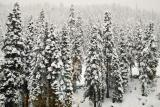 After 2 days of Winter storm, view from our room's window