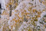 More snows on the fall colors