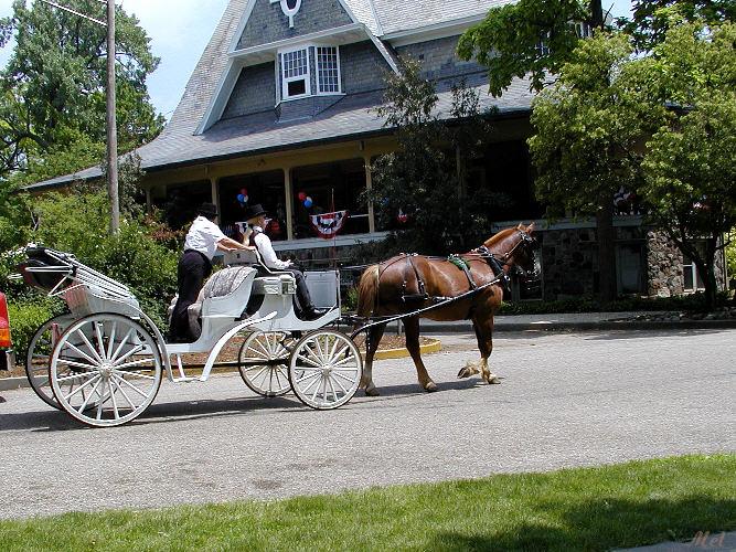 Horse  white carriage.jpg(303)