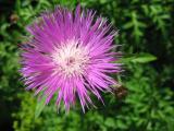 fen flower.jpg